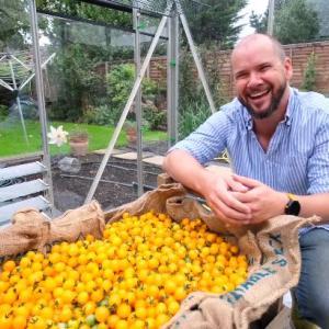 「大量ゲットだぜ」1本の茎から839個のプチトマトが収穫される、現世界記録の約2倍の記録