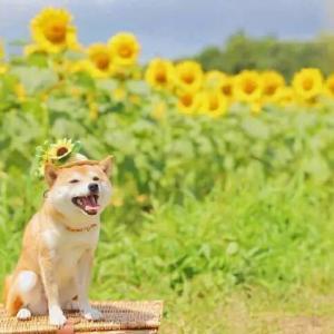微笑んだ君は太陽のように暖かい