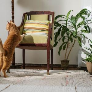 一人暮らしでも飼いやすい猫の種類をおすすめ、幸福感を高める!