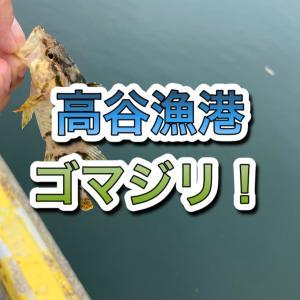 【香川県】高谷漁港(ゴマジリ)
