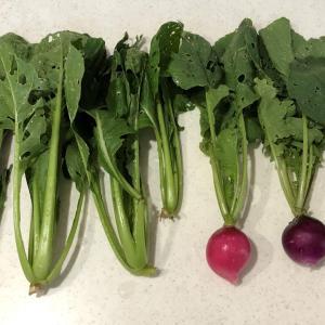 野菜ごみ堆肥で、きゅうり初収穫!(6月12日②)