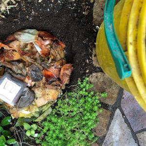 野菜ごみ堆肥にドリップコーヒー粕・麦茶パックを混ぜてみた!(6月20日①)