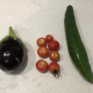 野菜ごみで、トマトへ追肥