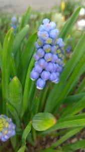 北海道家庭の庭 花達