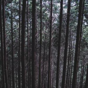 【香川】同僚の遺体を雑木林に遺棄した疑い 会社員の男逮捕