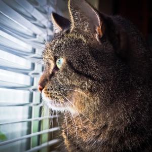 【鹿児島】ニャンコがハブ退治!元迷い猫、助けた主人に恩返し