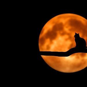 今夜は満月「ハンターズムーン」太平洋側は見られる所が多い