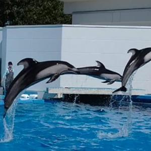 『マリンピア日本海「日本海最大級の水族館」(新潟市水族館)』