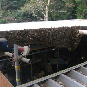 過去最大の分蜂群・分蜂のまとめ2019
