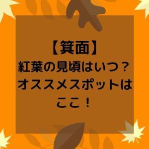 【大阪箕面】紅葉の見頃シーズンはいつ?オススメスポットは?【ライトアップ】