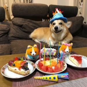 小太郎誕生日とミニ小太郎華子婚約
