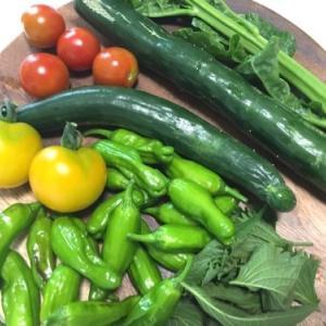 テレワーク中に昼食の食材が無い事が発覚!じゃあ畑で野菜採って来よう!!
