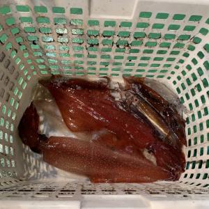 2021年5月28日 マイカ釣り釣果報告@スーパーバイキング