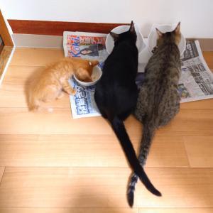 餌を変えたら激変した子猫たち