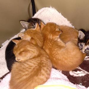 疲れ切っている保護猫活動