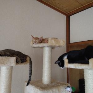 猫用システムトイレにして良かった事