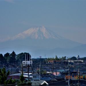 椿山から見た秋の富士山