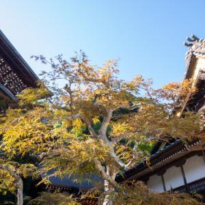 宮島観光 〜紅葉谷・大聖院周辺〜