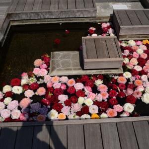 鶴岡市温海温泉バラ園まつり