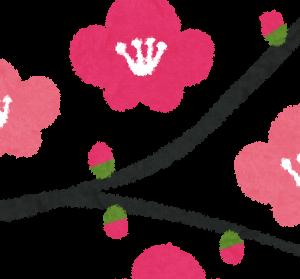 """【母の日までもうすぐ】まだ間に合う!お勧め商品""""梅の花"""""""