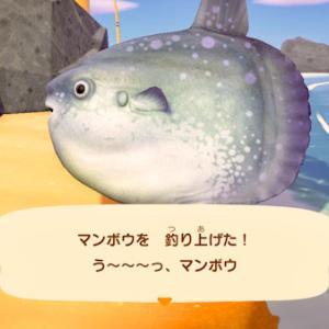 チキンライス島日記その13 / う〜〜〜っ、マンボウ!
