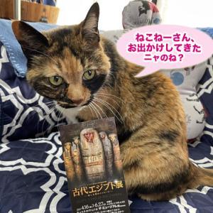 「猫の像」と「猫のミイラ」も!『古代エジプト展』@Bunkamura ザ・ミュージアム