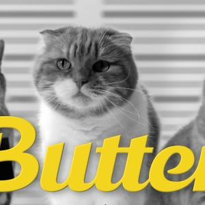 【韓国発】スコにゃん5匹ファミリーによるBTSの新曲『Butter』パロディー動画