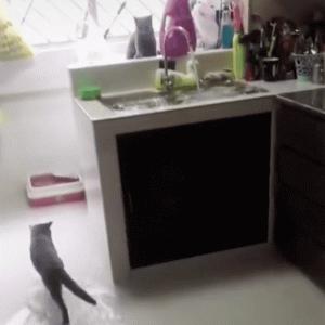 【シンガポール発】愛猫が蛇口をひねって、家中がまさかの浸水状態に!