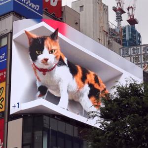 新宿駅東口前に街を見下ろす巨大三毛猫が出現!? 3D映像対応の大型街頭ビジョン、オープン!