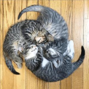 取り扱い注意!? 面白おかしい「壊れた猫」画像、大特集!