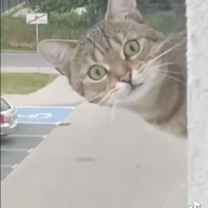 思わず、三度見っ!窓の外を撮影していたら…近所の猫にのぞかれていた予想外の展開に!