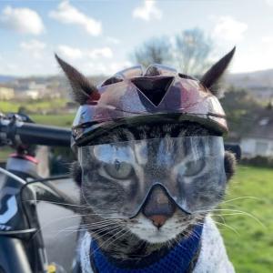 【フランス発】アイアンマンから中世の騎士まで!飼い主さんお手製のヘルメット専属モデル、カソード君