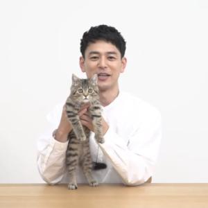 妻夫木聡さんとLANSCOPEのCMで共演!子猫タレントのかつお君