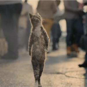 【英国発】胸を張ってマーケットを歩く猫、その理由は…ヴァンキス銀行のクレジットカードCM