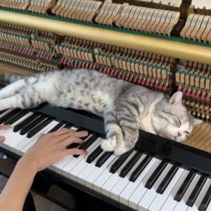 ピアノがお昼寝スペース兼マッサージ台! 飼い主さんの演奏を全身で楽しむ猫のハブル君