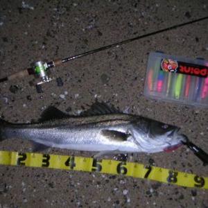 2010年1月1日  西海市でもイワシカラーの実績は高いのかなあ?スズキとアジをルアーで釣るよ! in 崎戸・大島 の巻