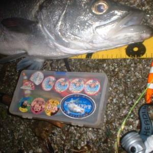 2008年6月21日 雨の日の夜、長崎市野母半島南部で自己記録のヒラスズキGET の巻