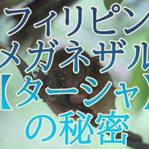 【フィリピンメガネザル】デリケートすぎて自殺⁉世界最小のターシャ