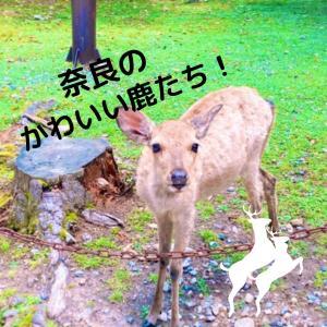 【奈良】奈良公園ではかわいい鹿たちとたくさん触れ合える!