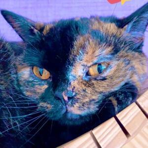 【大阪】大阪のとある猫カフェで猫たちと戯れる!