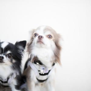 子犬を買うならどっち?ペットショップかブリーダーか
