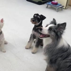 犬の幼稚園、4周間でここまで変わった?!