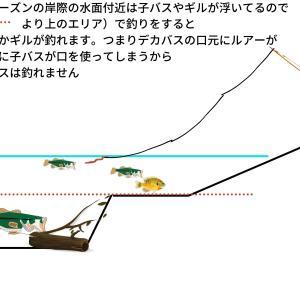 デカバスを選んで釣る方法(子バスとの釣り分け)教えて!【seebo君11時限目】