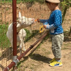 北九州市立総合農事センターに行きました 子供が遊べるおすすめスポット