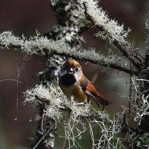 趣味の野鳥観察(キバネダルマエナガ)3