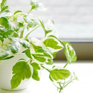 観葉植物のある暮らし(2)
