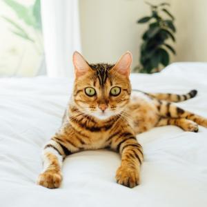 猫ちゃん大満足 究極のブラシ ファーミネーターを使ってみて