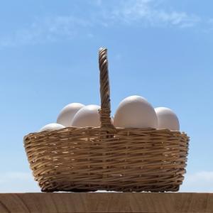 投資のリスクを抑える方法は?「卵は一つのカゴに盛るな」