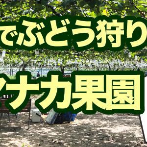【岡崎】ぶどう狩り・山中果園(ヤマナカ果園)の利用口コミ・予約方法・クーポン情報