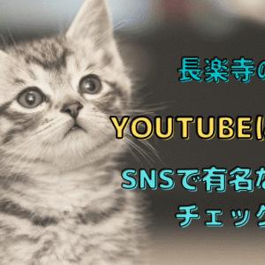 長楽寺の猫がyoutubeに登場!SNSで話題のお寺を調べてみました